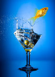 martini Arkivfoto