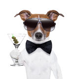Martini dog. Party dog toasting with a martini glass with olives stock images