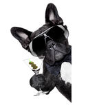 Martini dog Royalty Free Stock Images