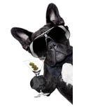 Martini dog Royalty Free Stock Images