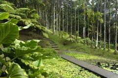 Martinique, garden of Balata Royalty Free Stock Photo