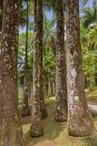 Martinique, garden of Balata Royalty Free Stock Photography