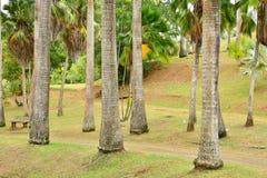 Martinique, malowniczy siedlisko Łagodny w Le Francois wewnątrz My Obraz Stock