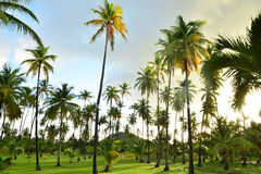 Martinique, the picturesque city of Sainte Anne in West Indies Royalty Free Stock Photo