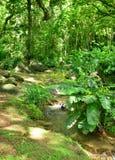 Martinique, picturesque Habitation Ceron in Le Precheur in West. Martinique, the picturesque Habitation Ceron in Le Precheur in West Indies royalty free stock photos