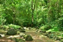 Martinique pittoresk boning Ceron i Le Precheur i västra royaltyfri bild