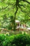 Martinique pittoresk boning Ceron i Le Precheur i västra royaltyfri foto