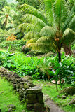 Martinique pittoresk boning Ceron i Le Precheur i västra arkivfoto