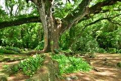 Martinique pittoresk boning Ceron i Le Precheur i västra royaltyfria bilder