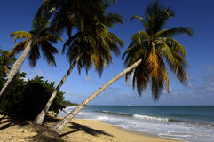 Martinique, Sainte Anne, beach of  les Salines Stock Photography