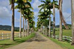 Martinique, schilderachtige stad van Riviere Pilote in de Antillen Stock Afbeelding