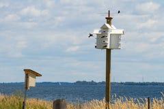 Martins púrpura, isla de Amherst, Ontario, con las turbinas de viento en el fondo Imagen de archivo