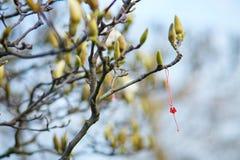 Martisor symbol av våren Royaltyfri Bild