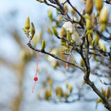 Martisor symbol av våren Arkivfoto