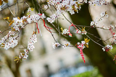 Martisor symbol av våren Arkivfoton