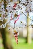 Martisor symbol av våren Royaltyfri Fotografi