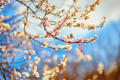Martisor, symbol of the beginning of spring Stock Photography