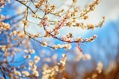 Martisor, symbool van het begin van de lente stock fotografie