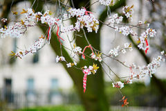 Martisors, symbols of beginning of spring Stock Image