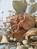 martwe róże Zdjęcia Stock