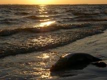 martwe ryby Fotografia Royalty Free