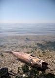 martwe ryby Zdjęcia Royalty Free