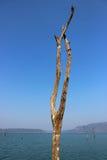 martwi jeziorni drzewa Fotografia Stock