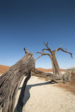 martwi pustynnych drzewa Zdjęcia Royalty Free