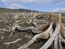 martwy drewna obrazy stock