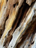 martwy tekstury drewna Obraz Royalty Free