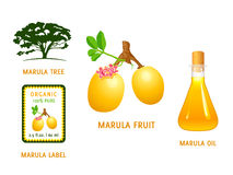 Marula fruit Stock Photography
