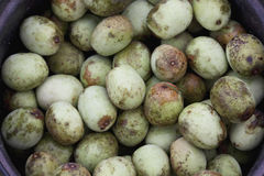 Marula Fruit Royalty Free Stock Photos