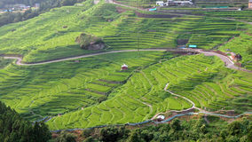 Maruyama Senmaida rice terraces in Japan Royalty Free Stock Photography