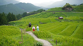 Maruyama Senmaida rice terraces in Japan. Puppets in the rice fields. Senmaida means one thousand rice paddies. They are located outside of Kiwa Town in the Stock Photos
