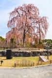 Maruyamapark in Kyoto Royalty-vrije Stock Foto