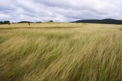 marvellous fält Arkivfoto