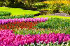 Marvellous flowers in the Keukenhof park. Royalty Free Stock Images