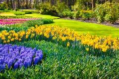 Marvellous flowers in the Keukenhof park. Stock Image