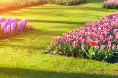 Marvellous flowers in the Keukenhof park. Royalty Free Stock Images