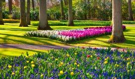 Marvellous flowers in the Keukenhof park. Royalty Free Stock Image