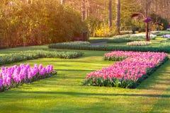 Marvellous flowers in the Keukenhof park. Stock Photo