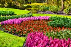 Marvellous flowers in the Keukenhof park. Royalty Free Stock Photo