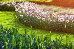 Marvellous flowers in the Keukenhof park Stock Image