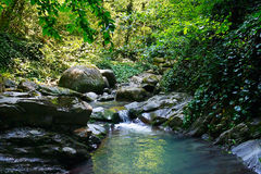 Marvellous mountain stream among southern forests Royalty Free Stock Photos