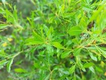 Greenish royalty free stock photo
