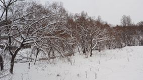 Marvelous winter landscape of frost woods, snowy hills. Aerial fly up by spruce tree branches from misty forest in white stock video footage