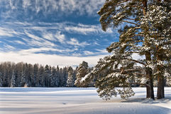 Marvelous winter sky and forest Royalty Free Stock Photos