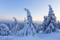 Marvelous winter sunrise high in the mountains in beautiful forests and fields. Tourist scenery. Fabulous winter background. Marvelous winter sunrise high in royalty free stock images