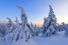 Marvelous winter sunrise high in the mountains in beautiful forests and fields. Tourist scenery. Fabulous winter background. Marvelous winter sunrise high in royalty free stock photos
