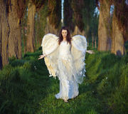 Marvelous woman-angel in the forest Stock Image